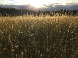 Reach Wood Meadow
