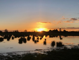 Tubney Fen sunset