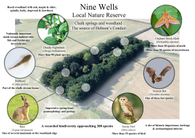 Nine Wells BioBlitz