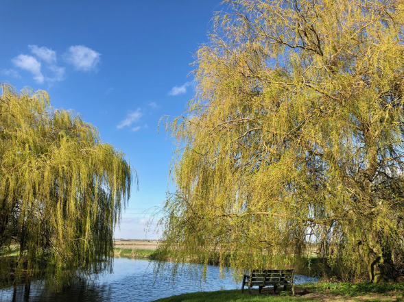 Willows at The Hythe
