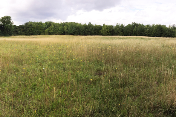 View of Reach Wood Meadow