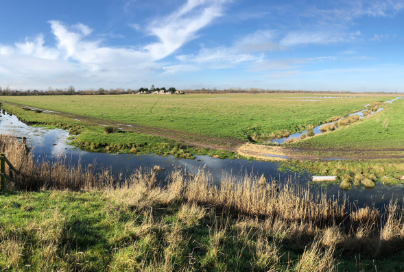 View of Tubney Fen